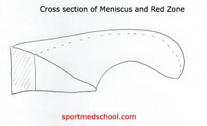Crosssectionmeniscus1
